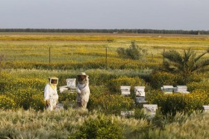 New research shows non-bee pollinators are responsible for between 25 and 50 percent of flower visits for some crops. File photo by UPI/Ismael Mohamad | License Photo