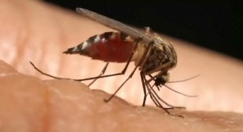 Health experts confirm Microcephaly link with Zika virus