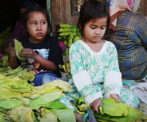 Report-Child-workers-up-against-tough-conditions-health-risks-in-Indonesian-tobacco-fields