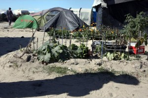 hollande-france-to-dismantle-calais-migrant-camp-completely-and-definitively