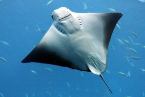 singapore-underwater-world-diver-killed-by-stingray