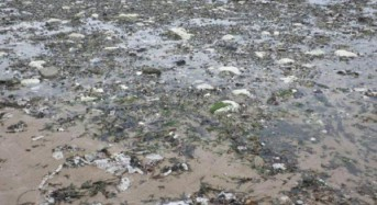 Britain's environmental initiative could ban wet wipes