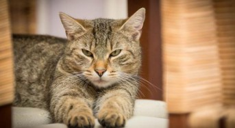 Study: People with cat-borne parasite more likely to be business-oriented