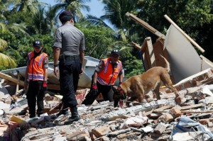 Indonesian K-9 dog police officers search for victims at a collapsed house in Tanjung, West Nusa Tenggara, Indonesia, on Wednesday. Photo by Adi Weda/EPA-EFE