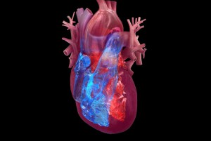 New research suggests that people who have a heart attack are at higher risk for stroke for at least three months afterward. Photo courtesy of the American Heart Association