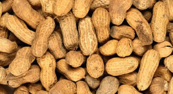 Peanut allergy patch has mediocre showing in new research