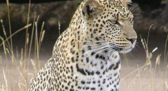 Leopard kills 2-year-old boy at South Africa park