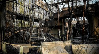 Dozens of animals killed in fire at German zoo